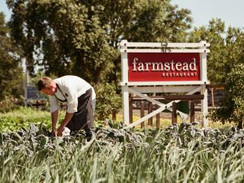 Farm-to-Table Manager Kipp Ramsey pulling Lacinato kale from Farmstead's on-site garden