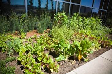 Chef Paul Piscopo's herb garden on the fourth floor of The St. Regis San Francisco in downtown S.F.
