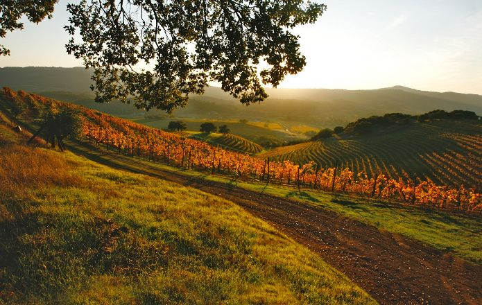 Heart of Sonoma Valley, photo by Heart of Sonoma Valley Association