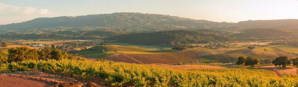 The View from the Mountain Top at Kunde Family Estate