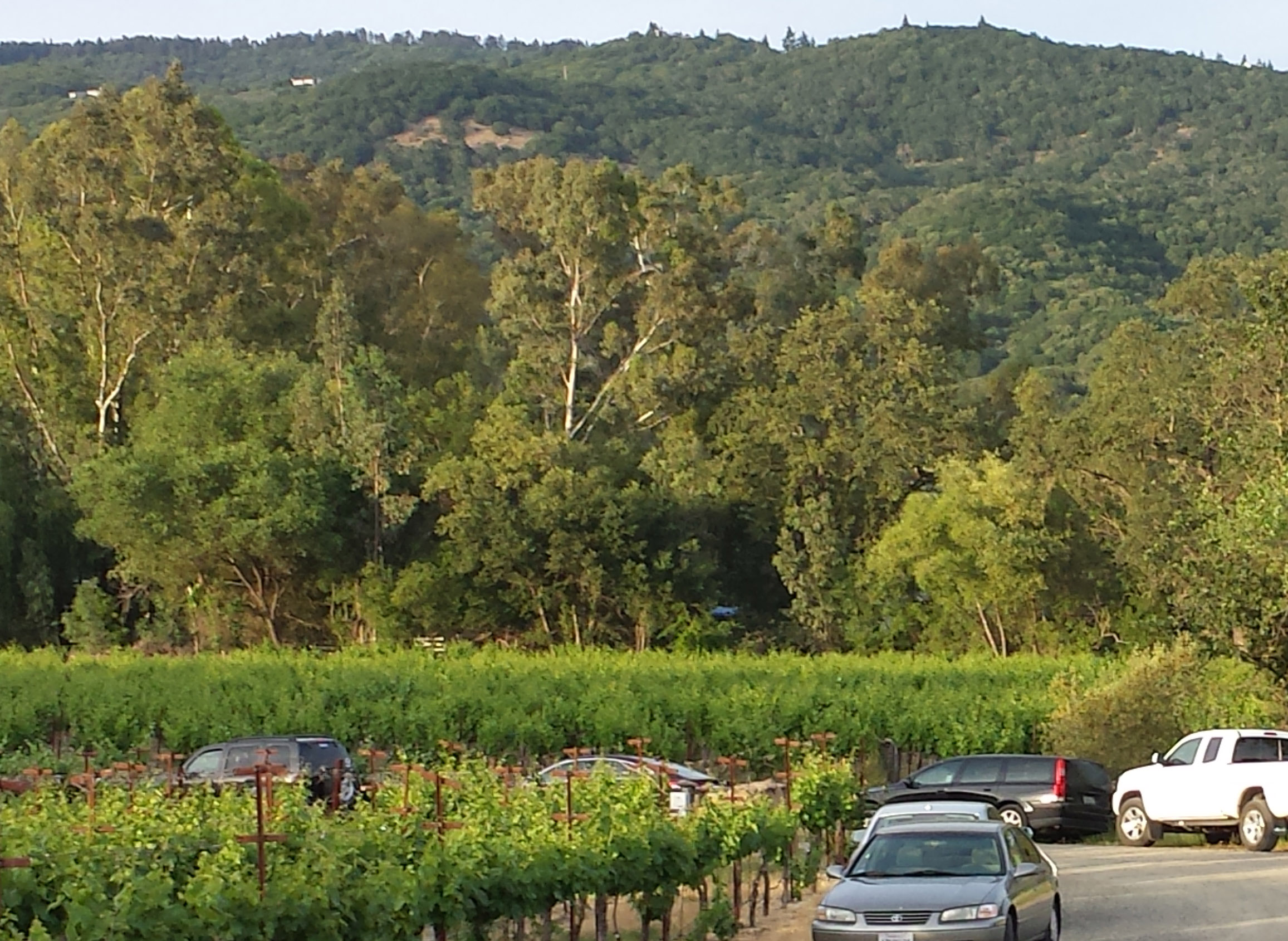 The View from the Front Porch at Little Vineyards