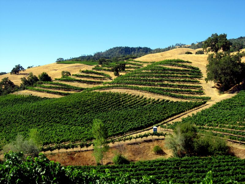 Wine Events in Sonoma County