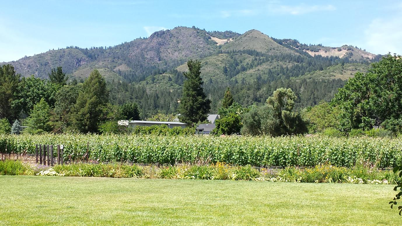 A View of Landmark Vineyard's Estate Vineyard, Sugarloaf Ridge, & Hood Mountain