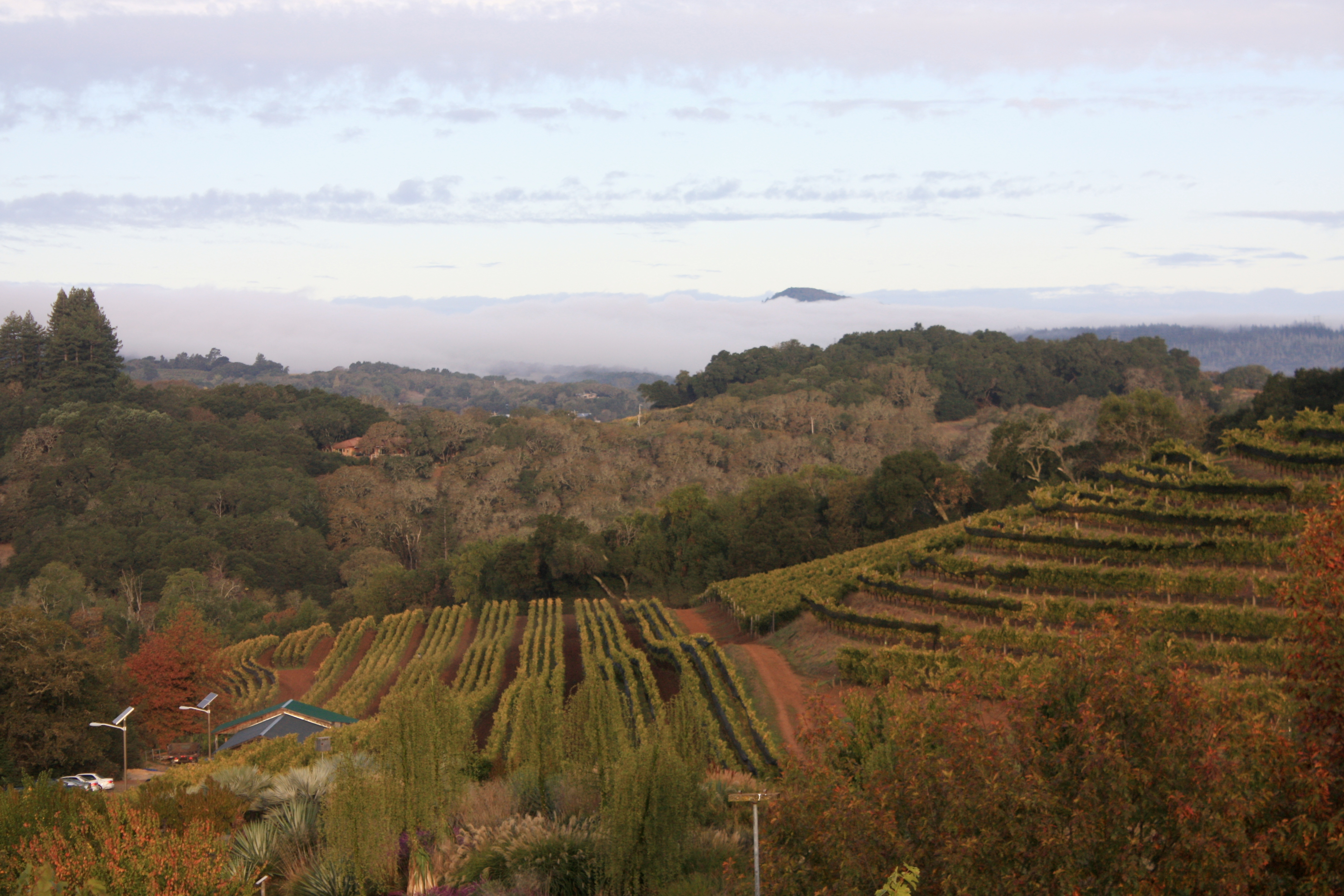 A View of the Benziger Family Winery Property