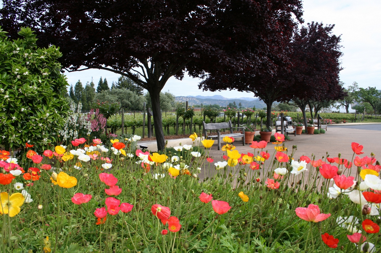A Beautiful View Outside a Napa Valley Winery