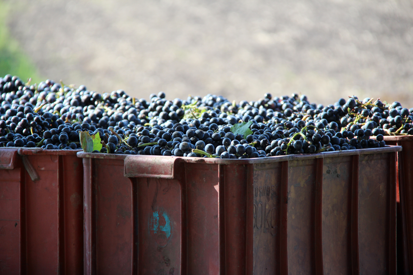 grapes in container