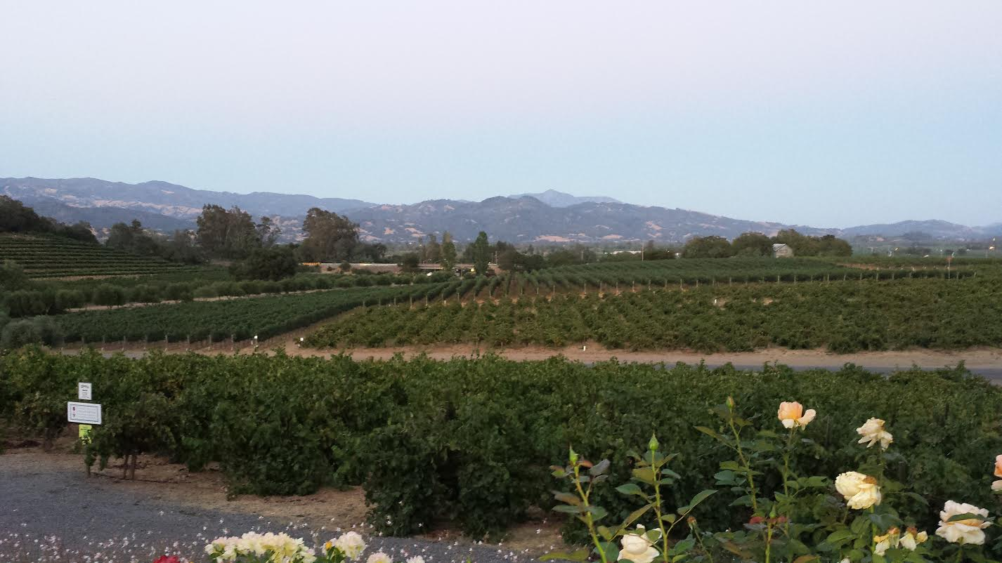 A View of the Vineyards at Francis Ford Coppola Winery