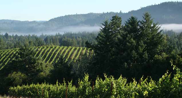 Hartford Family's Far Coast Vineyard