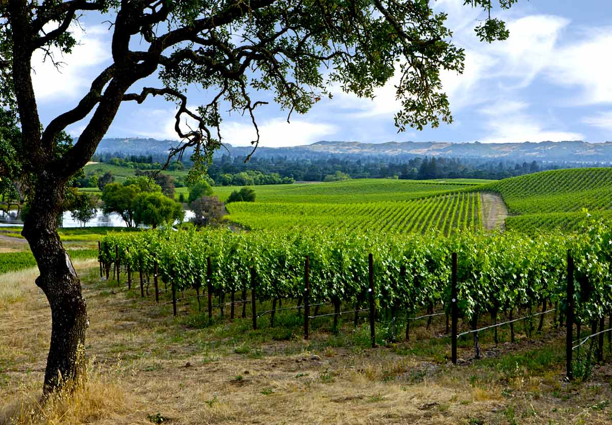 New Year's Eve Day in Napa & Sonoma