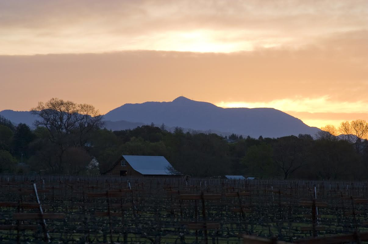 Quivira Vineyards & Winery, Sunset Facing Mt. St. Helena
