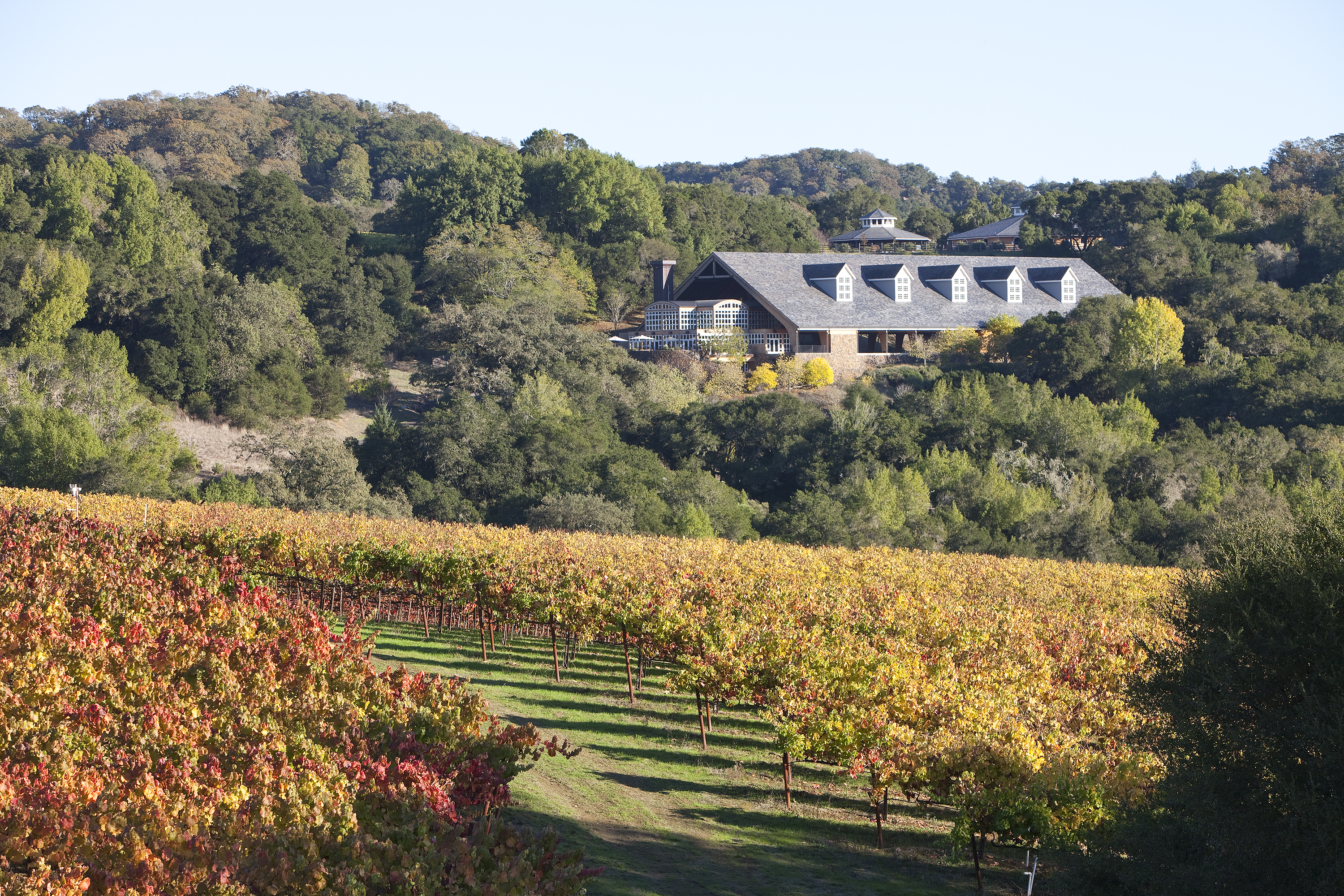 Chalk Hill Estate Vineyard and Winery.  © Brent Winebrenner
