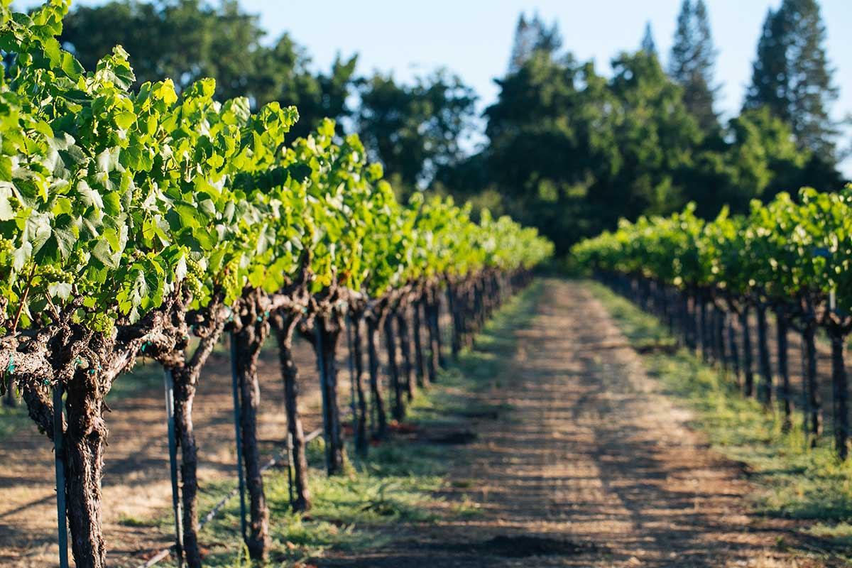 Kendall Jackson: Sonoma County Wines