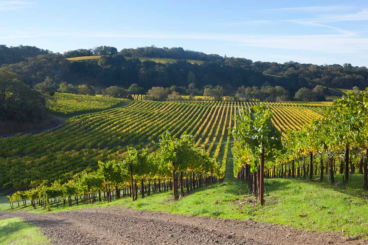 Chalk Hill Estate Vineyards © Brent Winebrenner