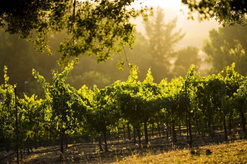 Arrowood vineyard