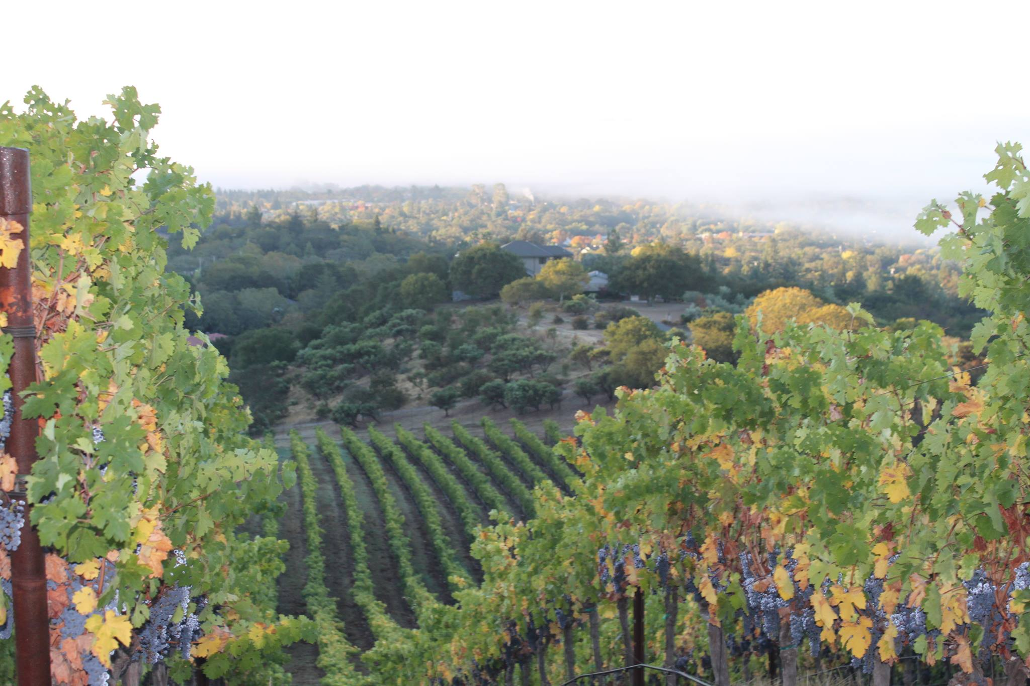 A View of One of the Estate's Vineyards