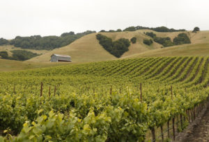 slhomepage_vineyard